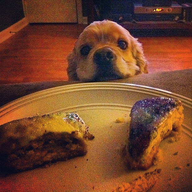 kingcake and dog