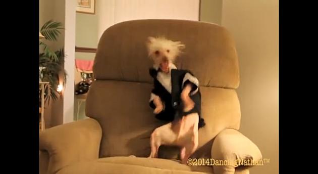 dog dances to cupid shuffle